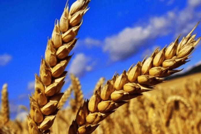 v-ukraine-hotjat-zapustit-blokchejn-ploshhadku-dlja-torgovli-selskohozjajstvennoj-produkcij