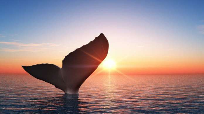 whale-alerts-kit-perevel-btc-na-1-milliard-dollarov-na-neizvestnyj-koshelek