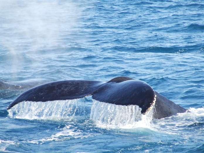 Биткоин-кит вывел 2 407 BTC с криптобиржи Coinbase